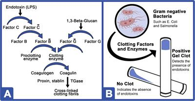 Frontiers | Horseshoe Crab Aquaculture as a Sustainable Endotoxin Testing Source